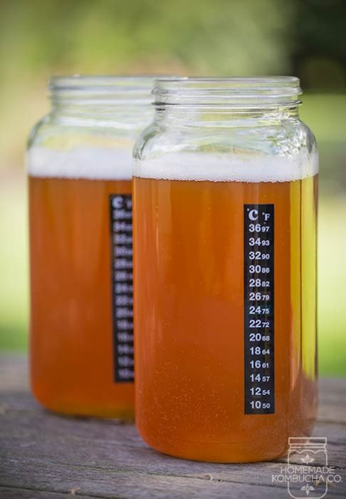 kombucha brewing thermometer